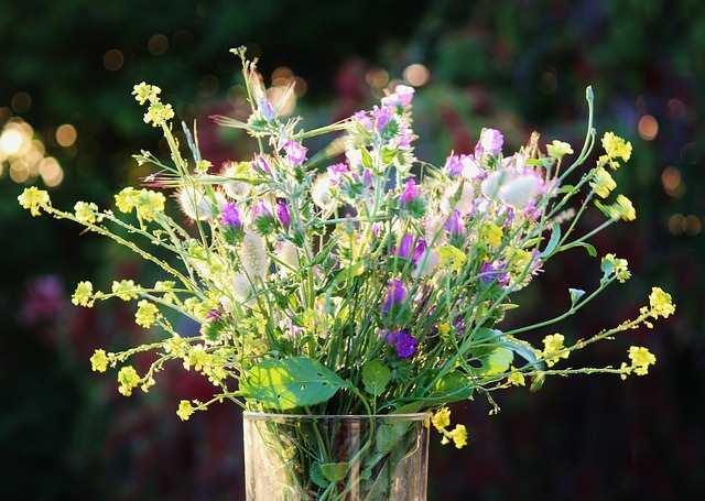 field-flowers-701126_640